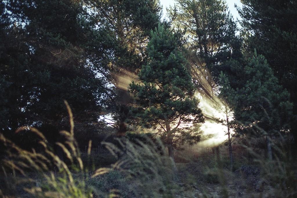 luz_soria9