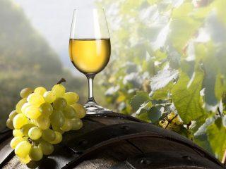 Vino-blanco-periodiconmexcom