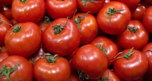 tomates-apilados